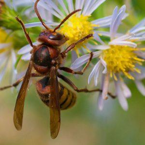 wasp pest control Dublin